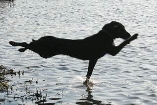 if muybridge could bark (maybe a long shot but hey this dog is running)